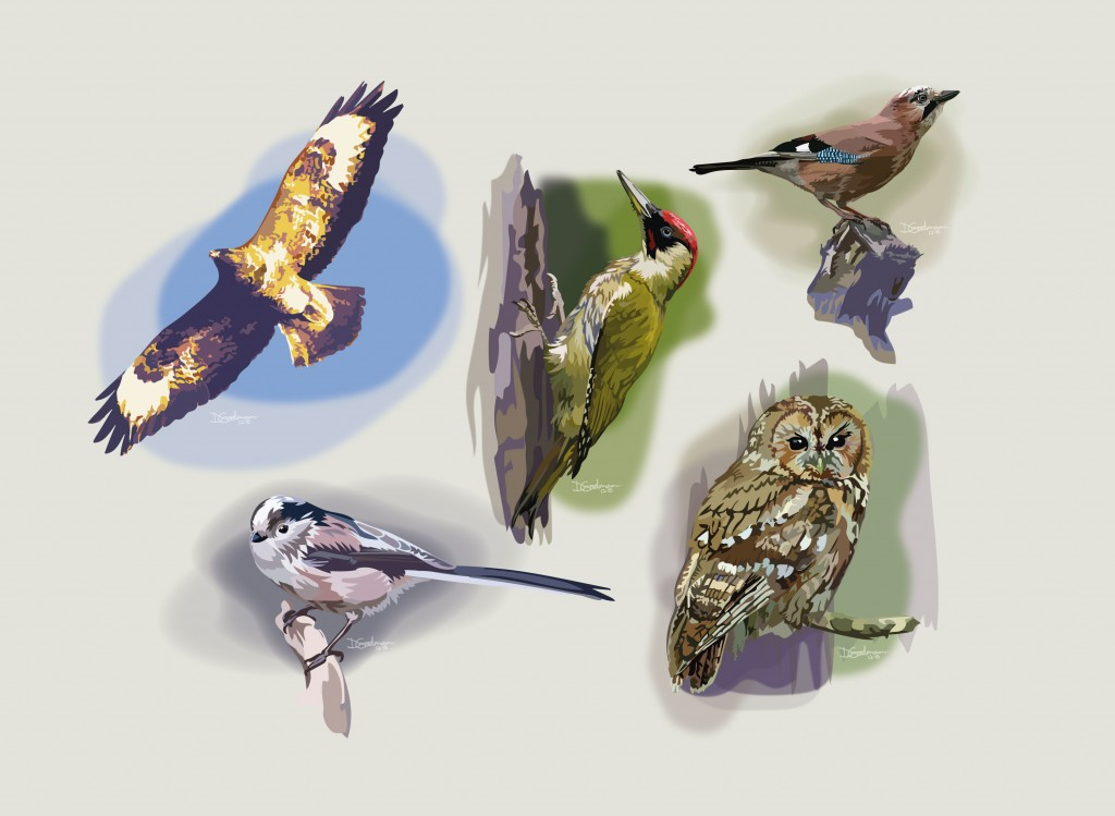 Pentredwr-Birds