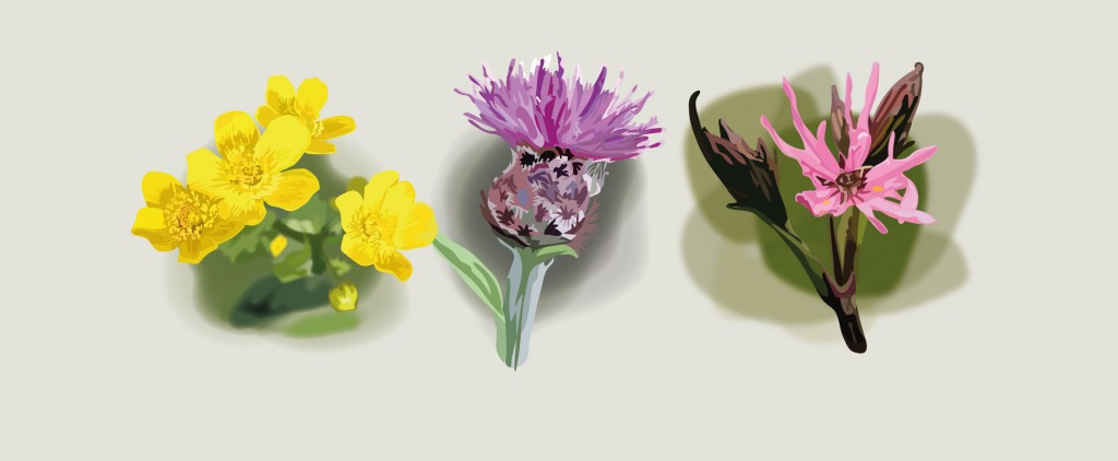 Pentredwr-Flowers