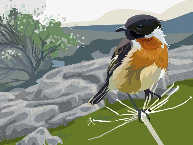 Limestone wildlife illustration